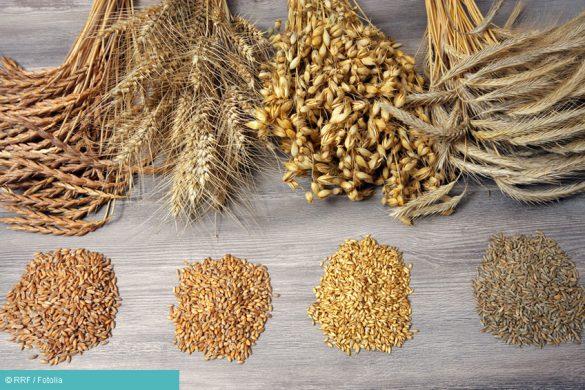 Getreidearten zusammengestellt