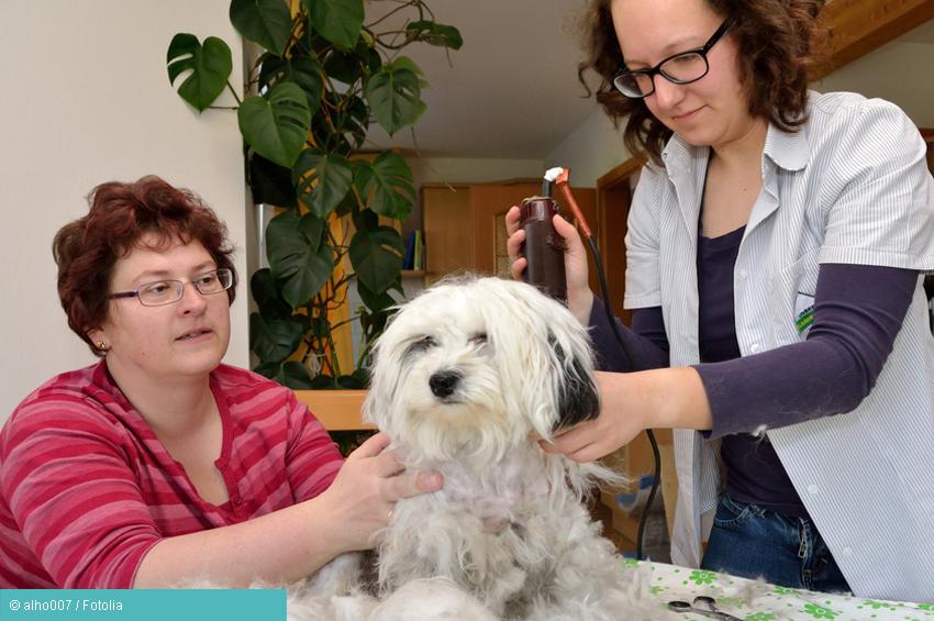 Hundebesitzerin laesst ihrem Hund das Fell schneiden - Hundeallergie