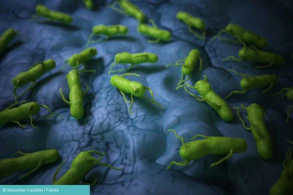 Salmonellen Erreger