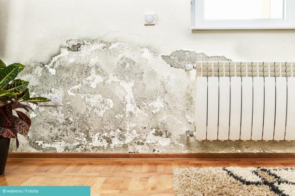 Schimmelpilzallergie durch feuchte Wände
