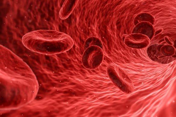 Blut auf dem Weg in Adern und Venen, hier entsteht das Risiko einer Lungenembolie