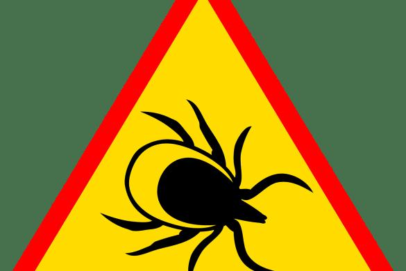 Krim-Kongo Fieber